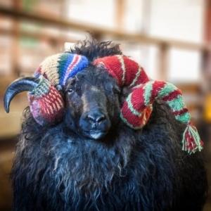 Photo: esjatravel.is knitting tours