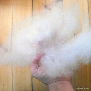 carded wool fiber
